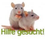 ratten hilfe gesucht