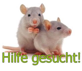 hilfe gesucht 37 g ttingen ca 12 ratten alleine gelassen rattennothilfe nordhessen. Black Bedroom Furniture Sets. Home Design Ideas